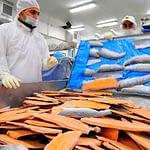 Minsal advierte riesgo de consumir salmones tras fuga en Calbuco