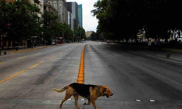 De la teoría a la práctica: ¿es posible la hibernación en un Santiago que obliga a moverse?