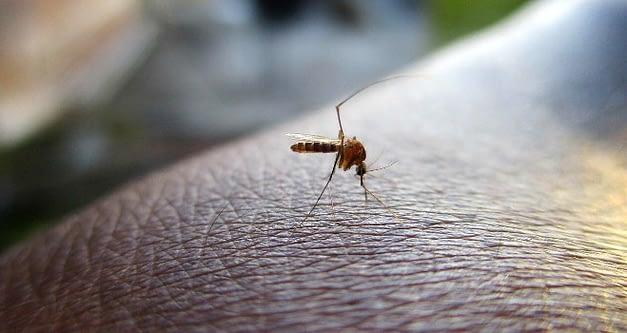 Autoridades confirman casos de dengue en Isla de Pascua e Iquique