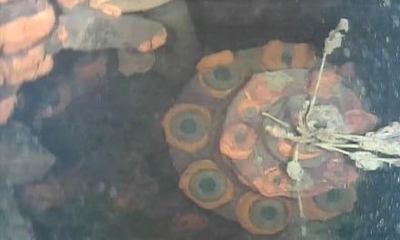 Un robot submarino hizo un descubrimiento en la central nuclear de Fukushima que sorprendió a los científicos