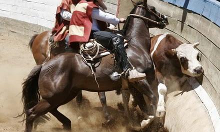 El rodeo, pugna entre la identidad aristócrata y la violencia animal