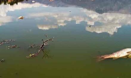 La escasez hídrica que ha generado masiva mortandad de peces en la Laguna Aculeo