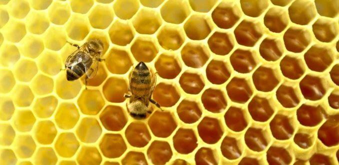 Incendio arrasa con zona de protección de abejas